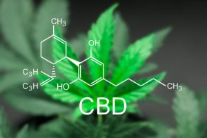 CBD vitalisiert das Endocannabinoid System