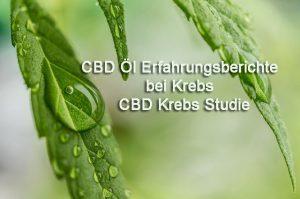 CBD Öl Erfahrungsberichte bei Krebs - CBD Krebs Studie