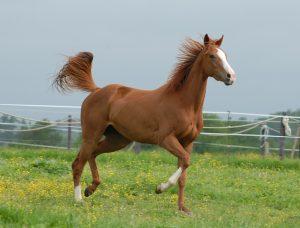 cbd royal für pferde