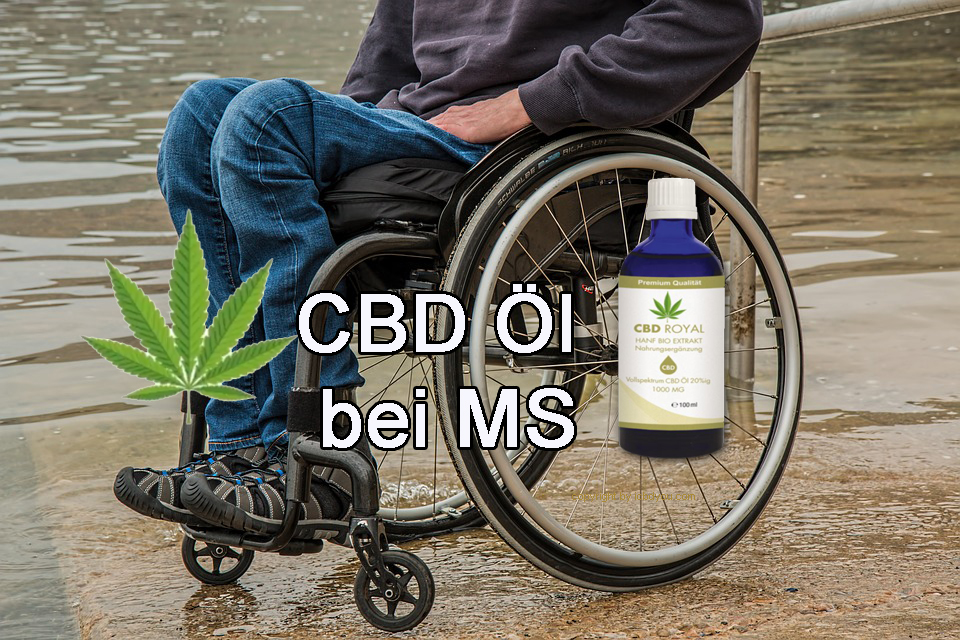 cbd öl bei ms