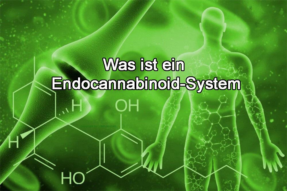 Was ist ein Endocannabinoid-System?  –